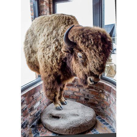 Half of bison