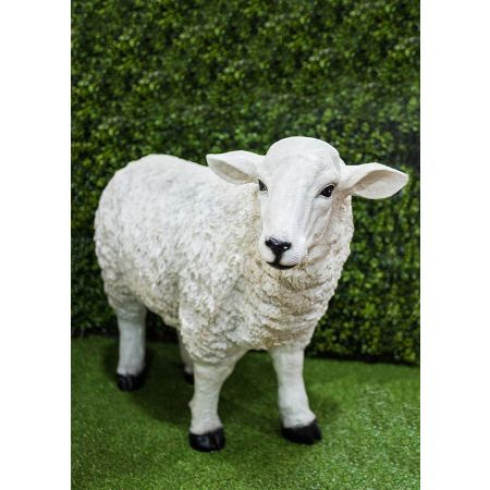 Large Sheep