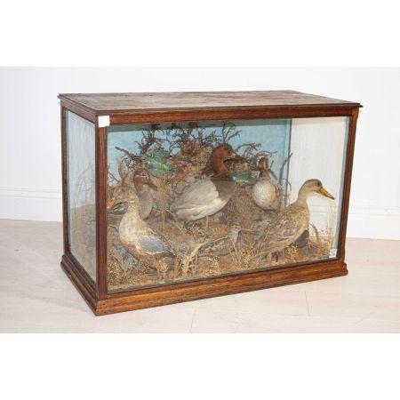 Taxidermy bird showcase