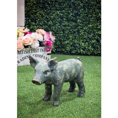 Verdi Pig - Head up